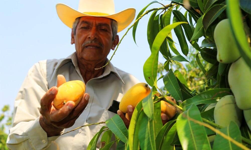 Agricultores michoacanos venden a Europa sin intermediarios
