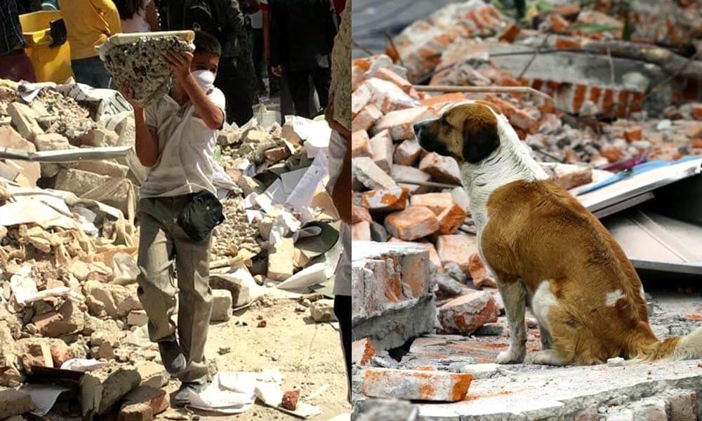 Niños ayudando y mascotas desamparadas después del sismo en Ciudad de México