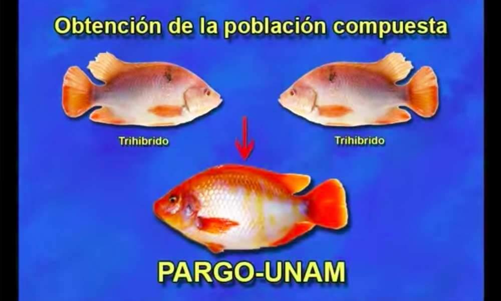 Obtención de la población del Pez Pargo UNAM