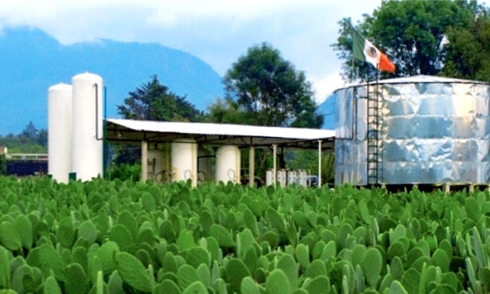 Planta de biogás Nopalimex